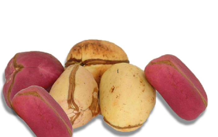 THE IGBO AND THE TRADITION OF KOLA NUT